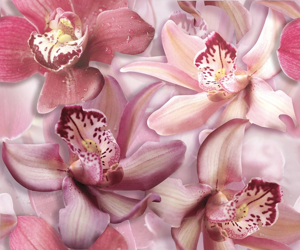 orchid-lila-komplet-2x-25x60