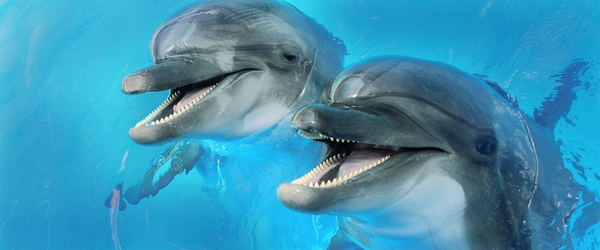 dolphins-2-centro_1