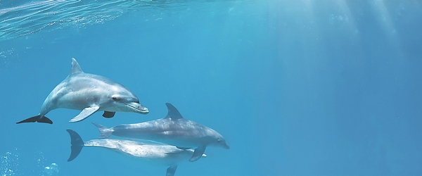 dolphins-1-centro