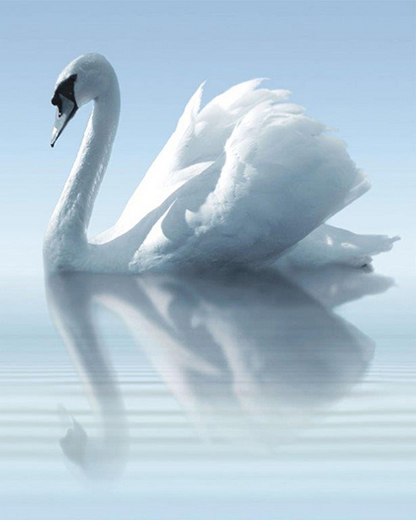 water-and-swan-a-kpl-3x-25x60